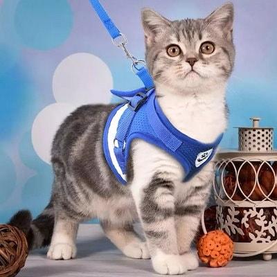 リード 猫