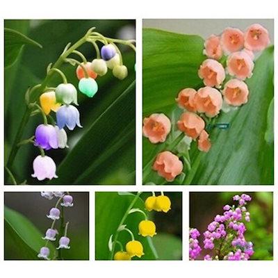 新しいniecベルオーキッドフラワー植物Convallariaの花庭のための盆栽の花