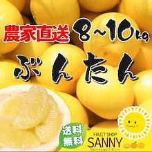 🍊愛媛/高知県産 文旦8〜10kg【送料無料】訳あり・不揃い 🍊ご注文受付期間:1月30日締切とさせていただきます ※生産量の少ない貴重柑橘につき、早期に販売終了させて頂く場合がございます。