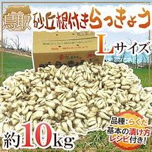 """【送料無料】土らっきょう 鳥取産 """"砂丘らっきょう"""" Lサイズ 約10kg(冷蔵便)【予約 5月末~6月】"""