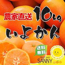 🍊明けましておめでとうございます🍊農家直送 愛媛いよかん10kg 規格外訳あり 🍊愛媛の青果市場だからできるこの価格‼  ※1月中旬頃より順次発送させて頂きます。
