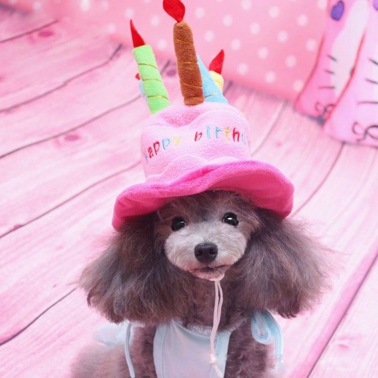 NEWデザイン!犬用お誕生日パーティ帽子/犬帽子/ハッピーバースデーハット/バースディ/かぶりもの/仮装/コスプレダックス チワワ/プードル/ドッグウェア/犬の洋服 飾り【管理番号:F808】