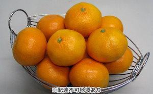 温州みかん 約3kg(内傷み補充分500g)