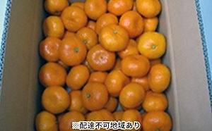 温州みかん 約5kg(内傷み補充分500g)